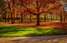 Autumnal landscape - Autumnal landscape in Berlin, Germany. #autumn #500px #orange #fall