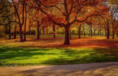 Autumnal landscape - Autumnal landscape in Berlin, Germany. #autumn #500px #orange #fall