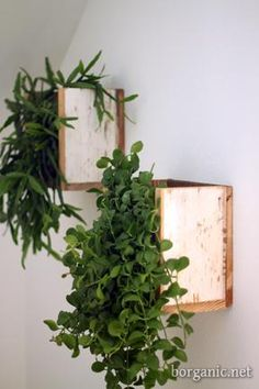 Instead of always setting out your houseplants on the horizontal, have a bit of fun using them as wall hangings with open front box containers created out of salvaged lumber. Fresh greenery is also a healthy choice for cleaner indoor air.