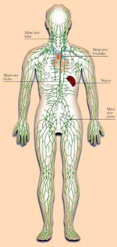 Nefunkční lymfatický systém, to je vstupenka k závažným chorobám. Lymphatic System, Anti Cellulite, Healthy Recipes For Weight Loss, Dry Brushing, Health Care, Health Fitness, Medicine, Drybrush, Fitness