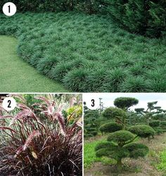 Drought tolerant plants for the Asian landscape in San Diego California