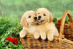 The Best Family Friendly Dogs – E Blog Line