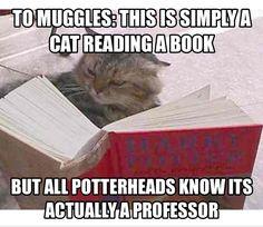 McGonagall reading a book