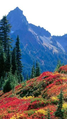 ✯ Autumn Colors - Tatoosh Range - Mount Rainier National Park - Banff, Alberta, Canada
