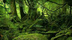 природа, лес, деревья, камни, мох, кустарник