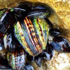 Santa Cruz CA: #sealife #shells #shellfish #athens  #crete #gdansk #malaga  #tunis #kiev #vilnius #norwich #praha  #jerusalem #tehran #tokyo #marseilles  #lima #bestofsantacruz #panama #buenosaires #islamargarita  #toronto #sanacruztoday #santacruzlife #santacruz  #capitola #sanjose  #santacruznow #visitsantacruz by slawekwojtowicz