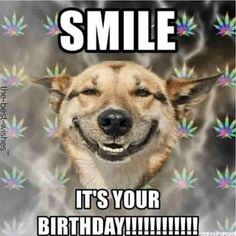 Looking for Funny Happy Birthday Memes? Check out our collection of Outrageously Hilarious Memes that broke the Internet. Happy Birthday Susan, Happy Birthday For Him, Happy Birthday Celebration, Birthday Wishes Funny, Birthday Memes, Happy Birthday Sister Funny, Birthday Ideas, Funny Sister Memes, Funny Dog Memes