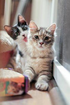 #Gatitos #Kitties