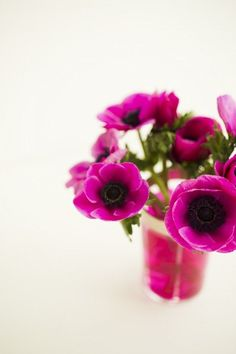 fuschia flowers - bright purple / pink