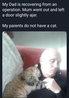 Sometimes animals just know what we need by maplesyrupchin from wholesomememes Funny Cute Cats, Cute Funny Animals, Cute Baby Animals, Animals And Pets, Funny Animal Memes, Funny Animal Pictures, Cute Pictures, Crazy Cat Lady, Crazy Cats