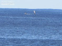 Whale saying Aloha #Hawaii #Kauai