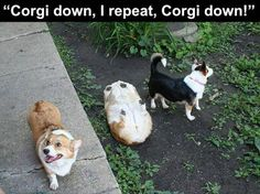 23 Funny Animal Pics for Your Tuesday