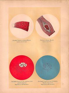 cells Teaching Science, Life Science, Petri Dish, Human Condition, Botany, Biology, Anatomy, Medicine, Rocks