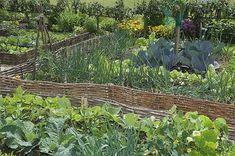 Associations au potager antimaladies et antiparasites - Diy Garten Organic Gardening, Traditional Garden, Diy Garden, Garden Signs, Urban Garden, Potager Garden, Garden Planning, Garden Design, Permaculture Design