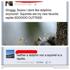 Some people should not be on facebook Dolphin and Squirrels a reptile  looks like the Animal taxonomy needs to be modified  I am pretty su