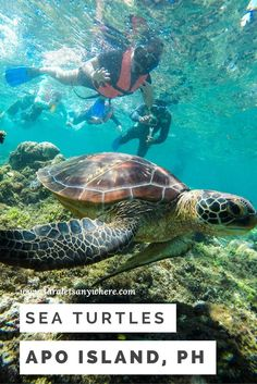 Swimming with turtles in Apo Island, Philippines | dive spots in the Philippines | ethical animal tourism | adventures in southeast Asia
