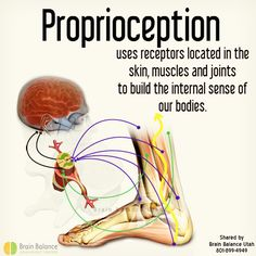 uses receptors located in the and to build the internal sense of our Bountiful Utah, Pleasant Grove, Right Brain, Our Body, Muscles, Bodies, Therapy, Facts, Quotes