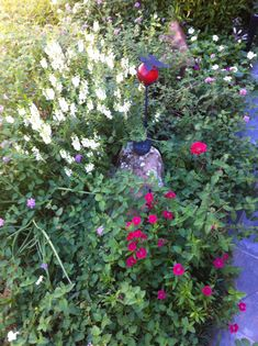 """Sue's """"There's no place like home"""" garden in Texas 