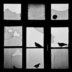 Ratos Alados (Andr Cherri) Tags: broken window glass vidro wings pigeons janela pombos asas ratos quebrado