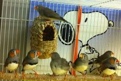 Snoopy and finches