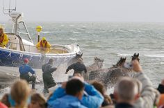 The other Northsea - cold and windy. From time to time the rescue team on Ameland, an island at the coast from the Netherlands drills the case of emergency ... horsepowered and pepped by hundreds of sightseer