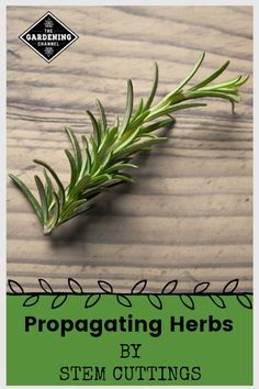 Grow these six popular herbs from stem cuttings. Follow this gardening guide to learn how to propagate herbs. #gardeningchannel #herbgardening #herbgarden
