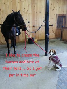 """ I like to chase horses and bite their tails…. So I got put in time out."""