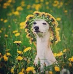 Image result for dog with flower crown funny