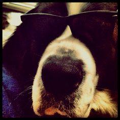 Dog hangover