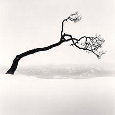 Kussharo Lake Tree, Study Kotan, Hokkaido, Japan, Photo by Michael Kenna Fine Art Photography, Landscape Photography, Nature Photography, Artistic Photography, Spiritual Photos, Tree Study, Japanese Tree, Black And White Landscape, Black White