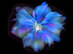 Q&A with Harold Davis: Creative Flower Photography - YouTube