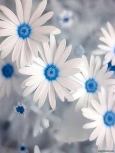 Ice blue and white flowers