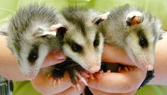 It's our #favorite time of the week: #WildlifeWednesday! These are a few #baby…