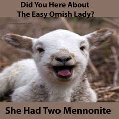 17 Popular Funny Baby Goat Quotes Memes And Puns Images Funny