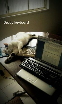 Decoy keyboard. Very clever.
