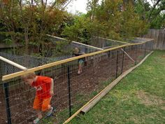 Chicken run!  (And a good story.)