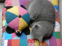 Bronte the Cat, with Achilles the Tortoise atop Bronte's Cushion from Make Hey! While The Sun Shines