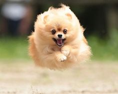 犬 ランキング - Google 検索
