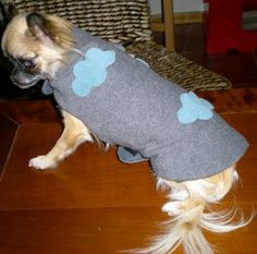 roupa-para-cachorro