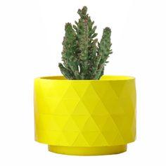 Opuntia Monacantha, con maceta Polygon amarilla mate, diseñada por RiiVDesign, disponible en MyCoolCactus.com; precio orientativo 19€, $23.43 Website, Yellow Girl Nurseries, Budget
