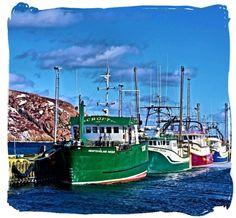 South side, St. John's (Killick Coast Images)