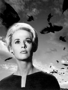 Melanie Daniels: Another iconic scream queen & Hitchcock beauty in the form of a young socialite who fends off ravage swarms of birds in her beautiful beach town. (The Birds, 1963, Alfred Hitchock. Portrayed by Tippi Hedren).