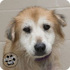 Urgent! I am at a full, kill shelter in  Troy, OH - Retriever (Unknown Type) Mix. Meet Ethel, a dog for adoption. http://www.adoptapet.com/pet/18379973-troy-ohio-retriever-unknown-type-mix