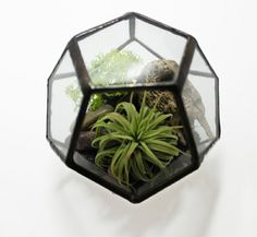 Terrarium Kit - Small Glass Geometric Dodecahedron - With ionantha air plant - Ships to Canada Terrarium Closed, Glass Terrarium, Terrariums, Plant Design, Garden Design, Aquarium Nano, Pot Plante, Crushed Glass, Modern Planters