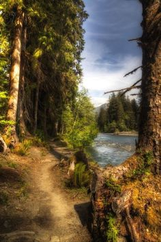 ***Hoh River Trail (Olympic National Park, Washington) by Frank Kehren