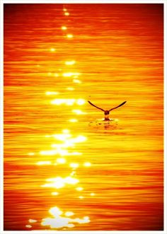 Sun bouncing off the water..........