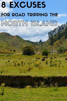 Venturing Off The Beaten Path to Discover History, Culture and Scenic Views. Road Trip New Zealand, New Zealand North, New Zealand Travel, Forest Waterfall, Family World, Countries Of The World, Amazing Destinations, Gold Coast, Family Travel
