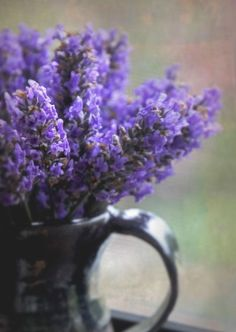 Lavender On The Sill A Signed Fine Art Photograph 4 X 6 inches