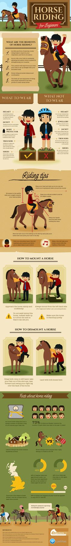 This infographic tells you all you need to know as a new rider. Find out the correct riding position, how to mount and dismount a horse and the correc