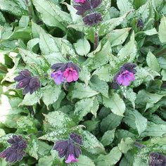 Brighten up dark garden spaces with these shade flowers that happily grow where their sunny counterparts won't. Shade Flowers Perennial, Flowers Perennials, Hosta Plants, Garden Plants, Globe Flower, Spring Flowering Bulbs, Hydrangea Garden, Organic Soil, Astilbe